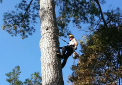 Tree-Trimming-Climbing-1
