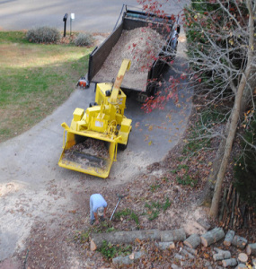Tree-Removal-Clean-Up
